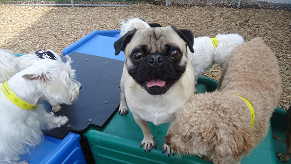 Happy Dog at Perfect Pet Day Care