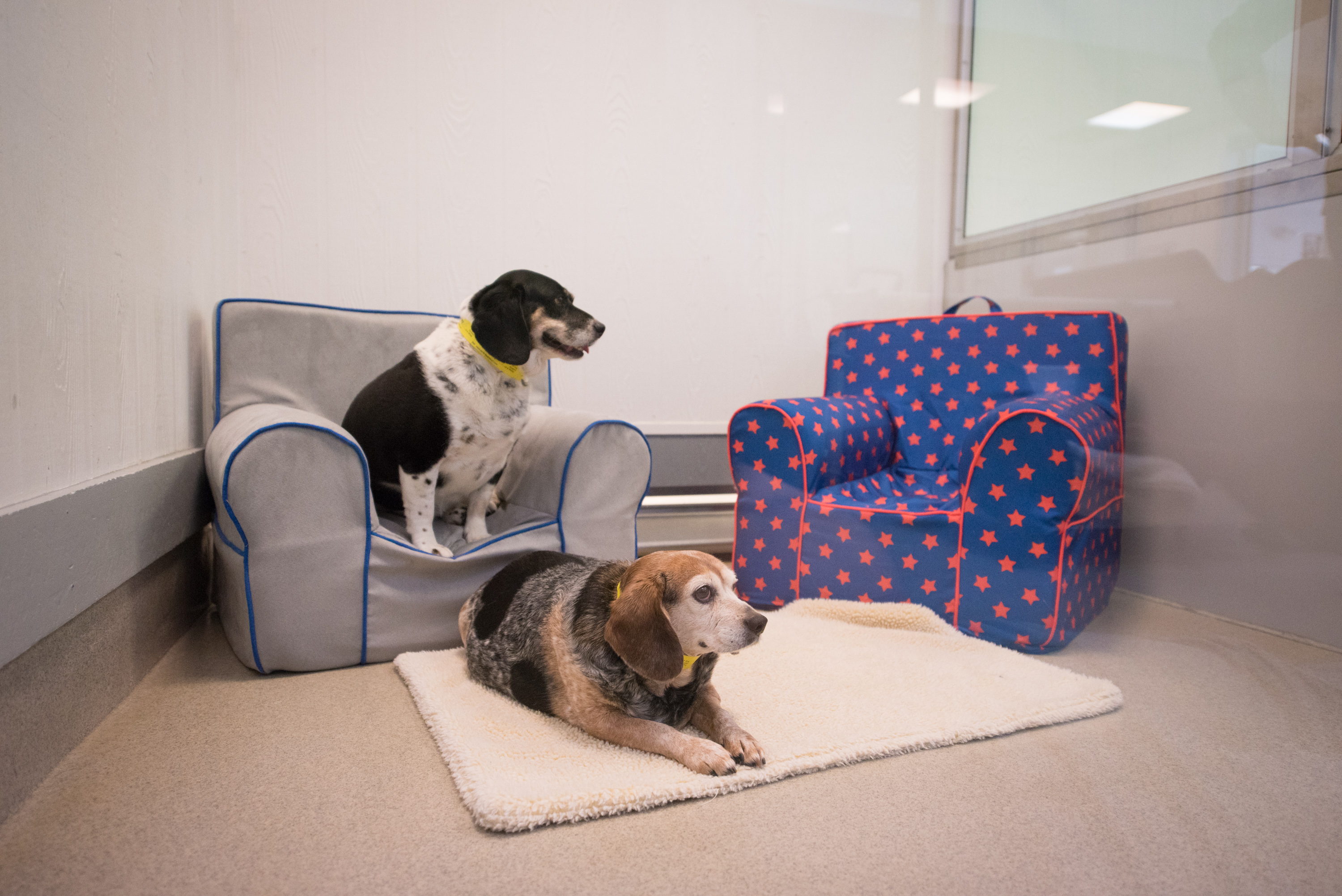 Happy Pets Lounging in their Luxury Suite