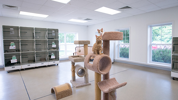 Cattery at Perfect Pet Restort