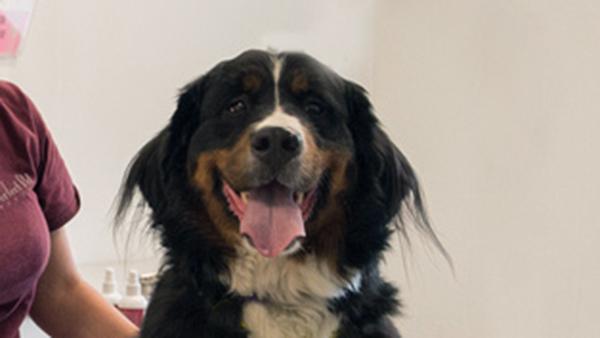 smiling dog at perfect pet resort
