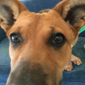dog sniffing camera at perfect pet resort